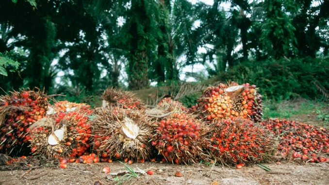 Dream About Palm Fruits And Udara - Evangelist Joshua Orekhie