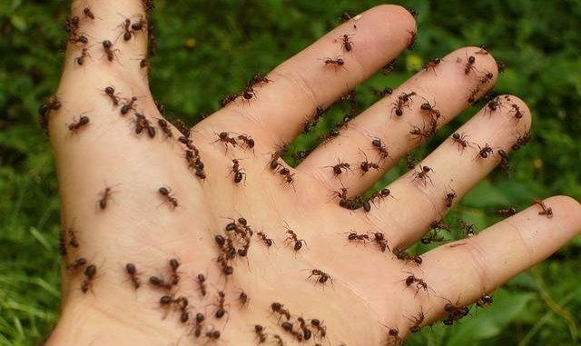 CAUSES OF SEEING ANTS IN THE DREAM - Evangelist Joshua