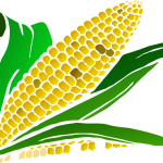 A Man Bought Cooked Corn For Me In The Dream