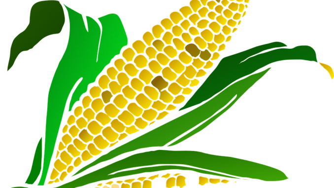 A Man Bought Corn For Me In The Dream