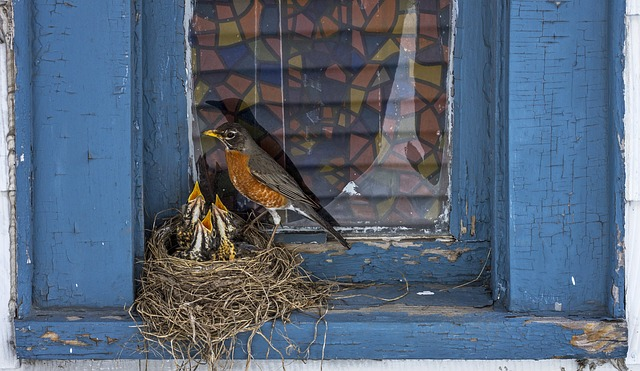 DREAM ABOUT BIRD BY THE WINDOW - Evangelist Joshua Orekhie