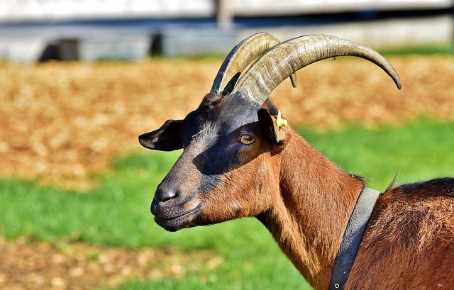 10 MOST DANGEROUS ANIMALS IN THE DREAM - EvangelistJoshua com